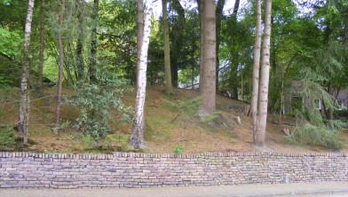 Bomen in IJhorst
