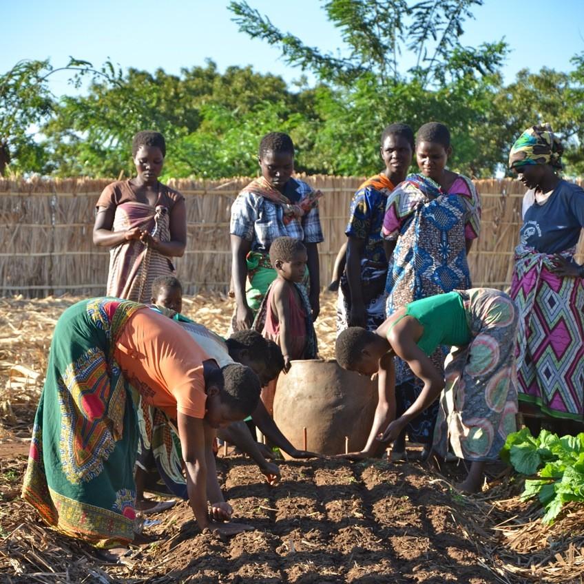 Vrouwen in het ontwikkelingsproject in dorp planten uien Stichting Stéphanos
