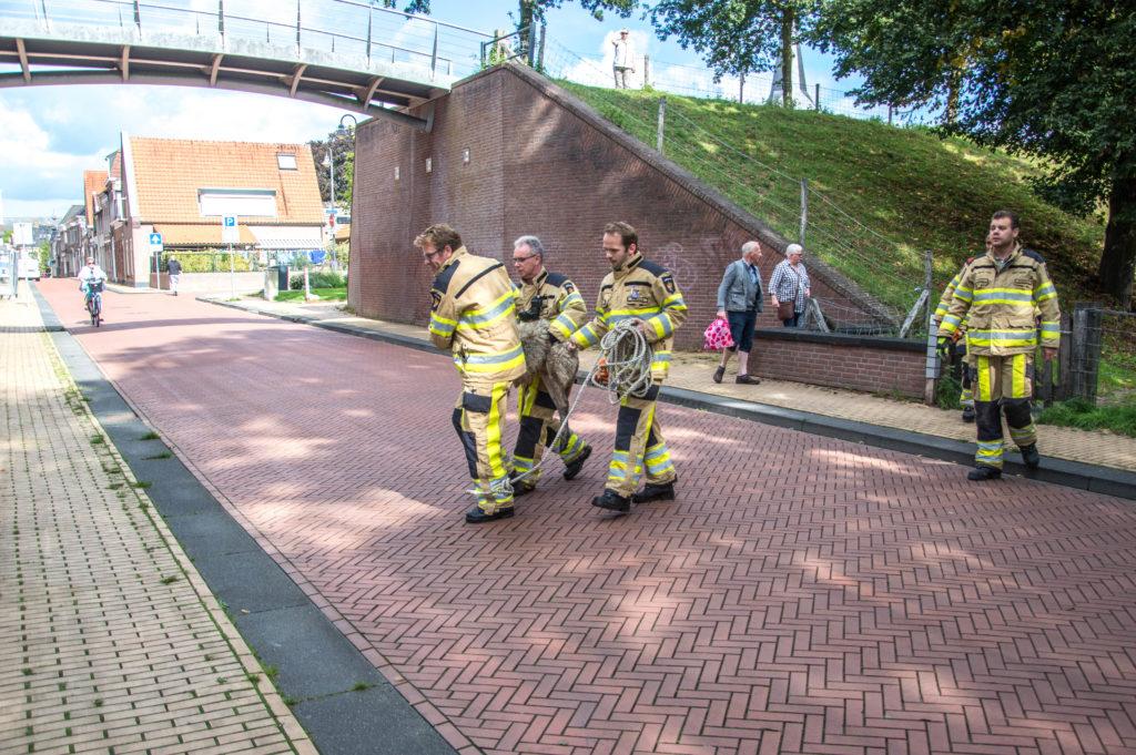 Brandweer redt schaap uit het water langs stadsgracht: De brandweer van Steenwijk moest vanmiddag uitrukken naar de Hogewal in Steenwijk waar een schaap Het bericht Brandweer redt schaap uit het water langs stadsgracht verscheen eerst op Steenwijkerland..
