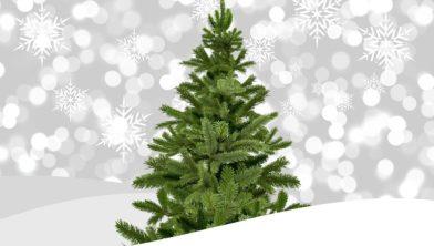 Kerstboom Inleveren In Teylingen Teylingen