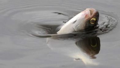 Vissen In Vijver : Vissen in tubbergse vijver happen naar lucht