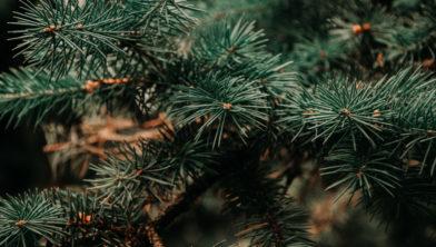 Domper Op De Sfeer In Albergen Verlichting Van Kerstboom Alweer