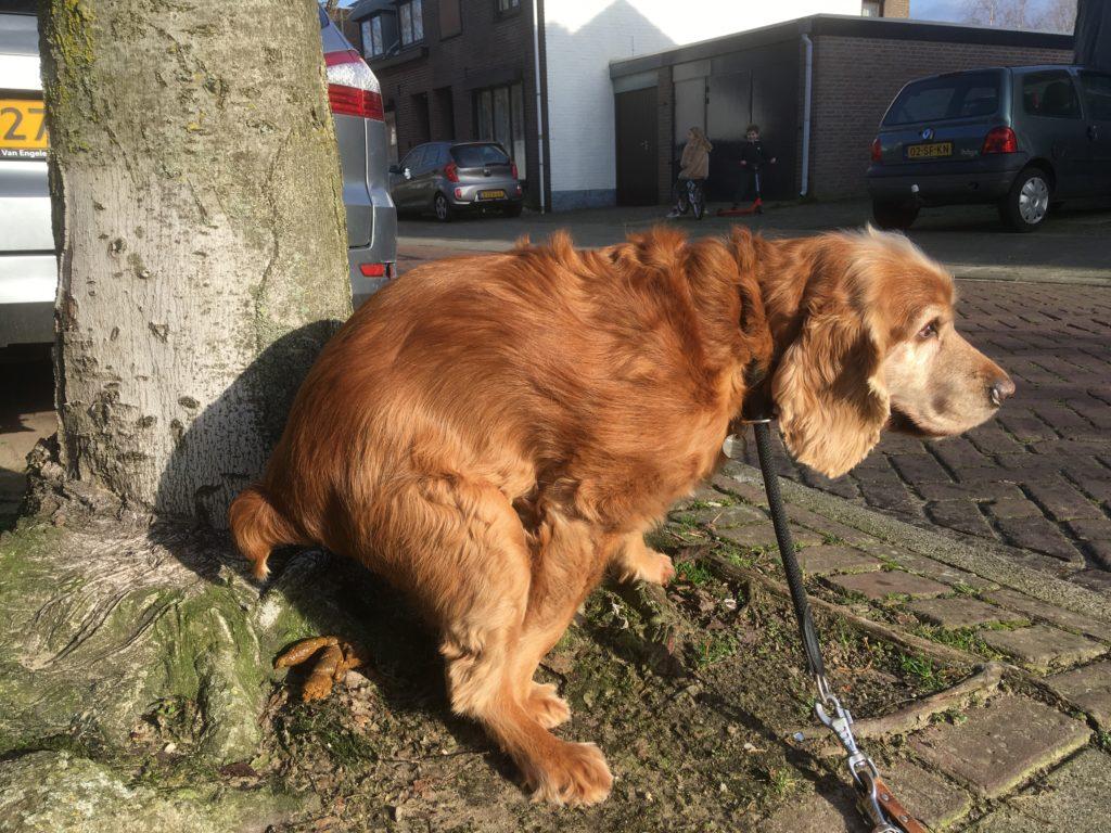 hond, poep, hondenpoep, ergernis, Evert Meijs