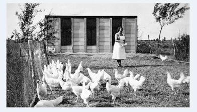 Lena Renders (Heike) voert de kippen