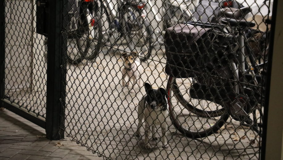 De honden werden tijdelijk opgesloten in een fietsenhok.