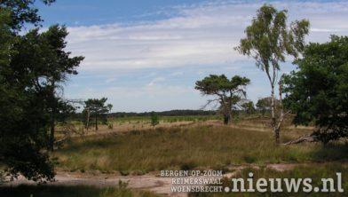 Archieffoto Kalmthoutse Heide