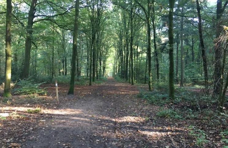 Wandeling langs het Leurse Kerkje, Huis te Leur en door het Leurse Bos