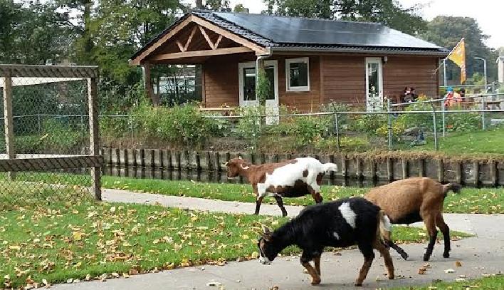 Hertenkamp De Borgstee In Winsum Viert Haar 50 Jarig