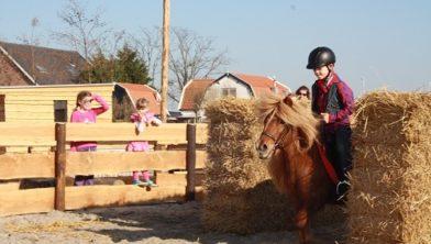 De Bonte Belevenis Assendelft.Pov Voorstander Van Bibob Onderzoek Bij Ponyboerderij De Bonte