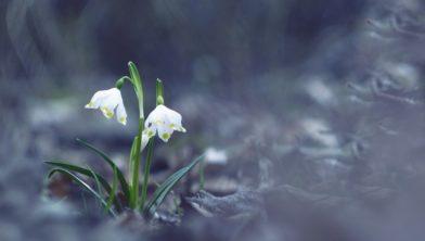 Een dag om het voorjaar in de kop te krijgen...
