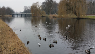 Het Zaandamse park met enkele bewoners.