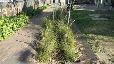 Een voorbeeld van een 'pocket park' in Sydney. Zaanstad wil ze ook.