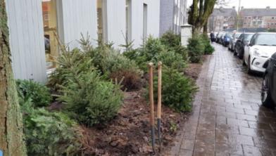 Zo zag het kerstbomenbos er dit jaar op 10 januari uit.