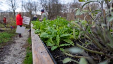 Voor ouderen die moeite hebben met bukken kwamen er afgelopen jaar in de tuin verhoogde bakken.