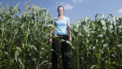 Stadslanderijen is een stadslandbouwinitiatief van een aantal boeren in de stadsrandzone van Zwolle