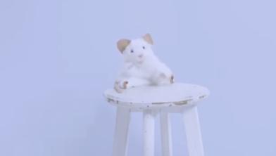 Het programma Piep, zei de muis