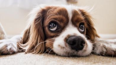 Pas op met mergpijpen voor de hond