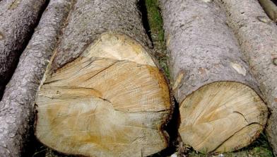 De zaag gaat de komende winter in vijfhonderd bomen (foto ter illustratie)