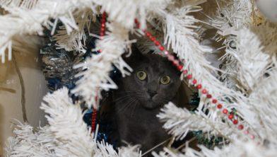 Hoe houd je je kat uit de kerstboom?
