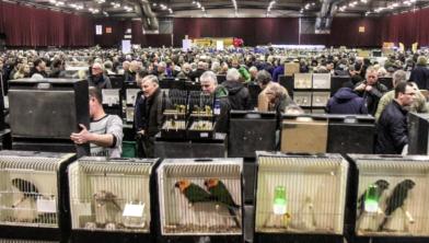 Vogels kijken in de IJsselhallen