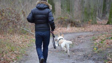 Een hond los laten lopen mag niet over, dus let op!