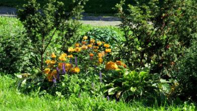 Free picture (Flower garden with shrubs) from https://torange.biz/flower-garden-shrubs-41157