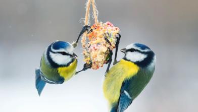 Klik de link aan voor nog meer bijzondere vogels