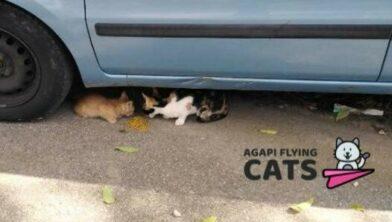 Zo steunt u deze katten