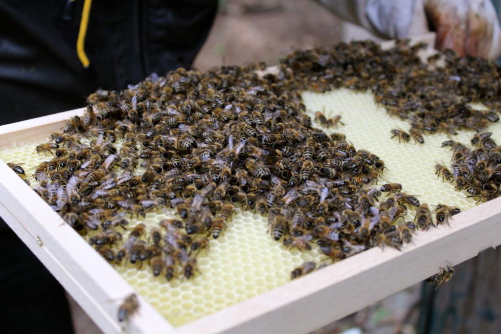 Bijenschool5