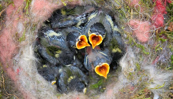 birds-nest-768779 banner - pixabay
