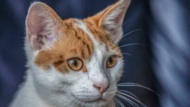 (let op: dit is niet een van de vermiste katten)