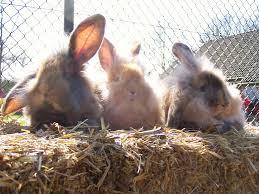 konijnen in de zon