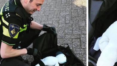De agent moet lachen als hij de teddybeer in de bagage ziet