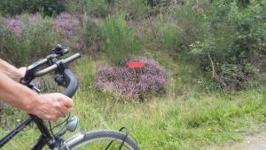 Anser fiets4daagse