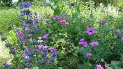 Wie heeft de mooiste versierde tuin?