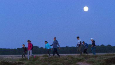 Nationaal Park Dwingelderveld, Ruinen, Drenthe, Nederland, Europa, Nationaal Park Dwingelderveld