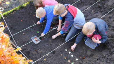 Bloembollen planten in de schooltuin.