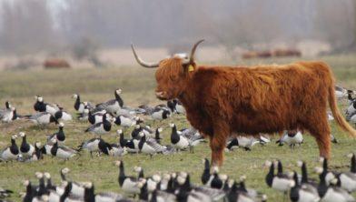 Veel vogels en....