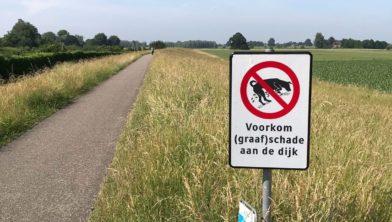 Graafschade door honden.