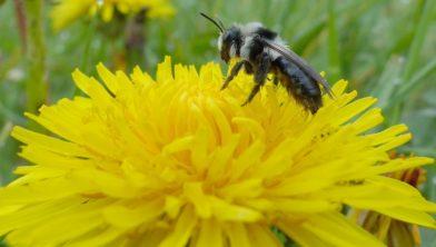 Bijen krijgen steun van scholen.