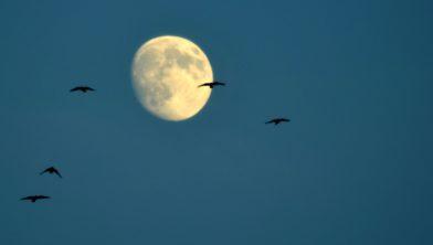 Bijna volle maan.
