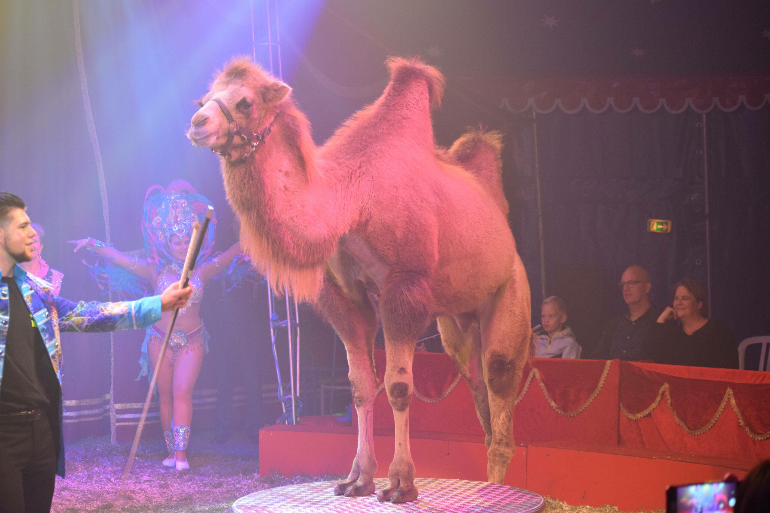 Circus met dieren.
