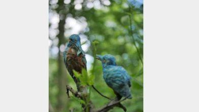 IJsvogeltjes van Hans Nijhof