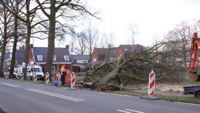 LUNTEREN - Woensdagmiddag 19 februari rond 16.15 uur is een breuk ontstaan in de waterleiding aan de Edeseweg in Lunteren. Tijdens de herstelwerkzaamheden viel een grote boom om. Mogelijk is door de storm beweging gekomen in het wortelstelsel van de grote boom, waarna de wortels de leiding hebben geraakt met een breuk in de waterleiding tot gevolg. De grond rondom de boom verzakte, waarna de boom omviel. De werkzaamheden aan de leiding lagen door de omgevallen boom even stil. Een boomverzorger heeft de boom in stukken gezaagd, waarna de herstelwerkzaamheden vervolgd konden worden. Door het incident was een rijbaan afgesloten. Onder het wegdek is een holle ruimte ontstaan. Hoeveel huishoudens zonder water zitten, is niet bekend. De werkzaamheden zullen tot laat in de avond duren.